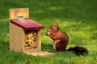 bird meal animal squirrel